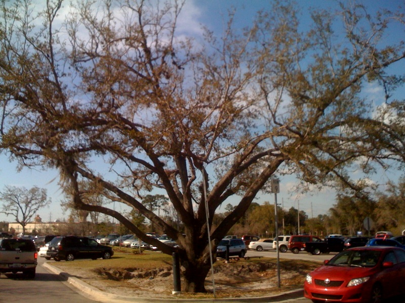 Day 199 – The Freaky Sanford Wal Mart Tree