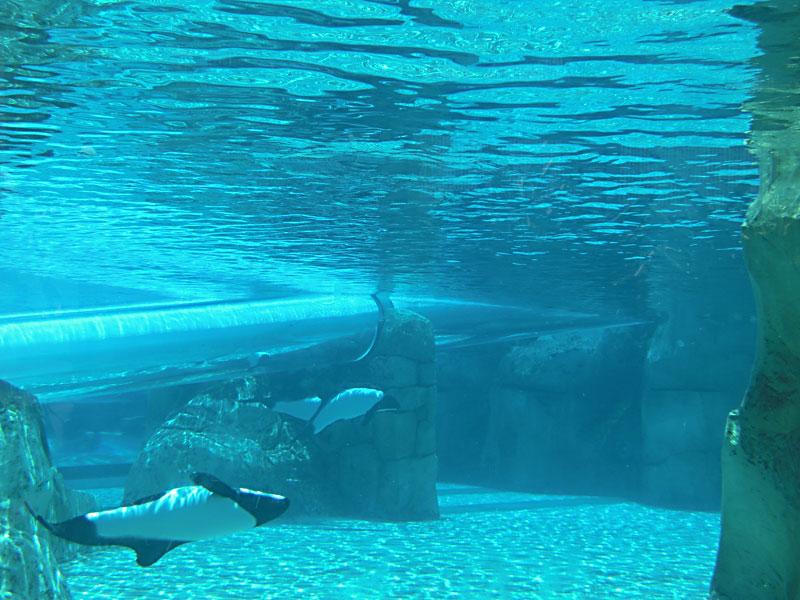 Day 235 – Aquatica Waterpark by Seaworld Orlando
