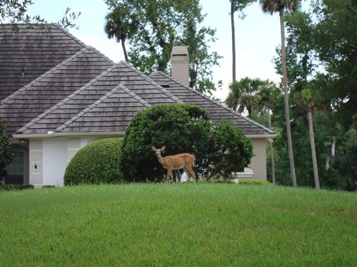 Day 299 – Deer in Alaqua
