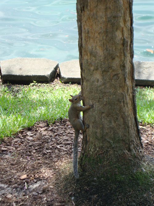 Day 329 – The Eola Squirrel