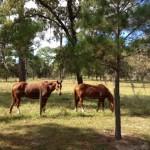 Horses on the Seminole Wekiva Trail