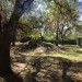 Spot the 3 Cheetahs at the Sanford Zoo thumbnail