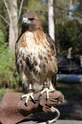 things to do with kids in Sanford FL - Central Florida Zoo