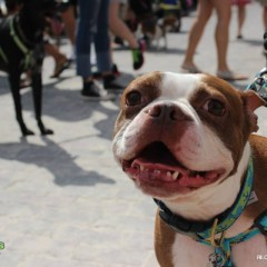 Downtown Sanford Dog and Craft Beer Festival